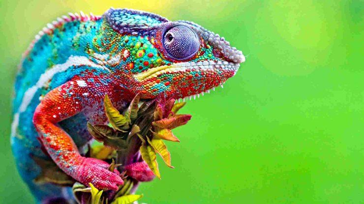 idiomy z kolorami