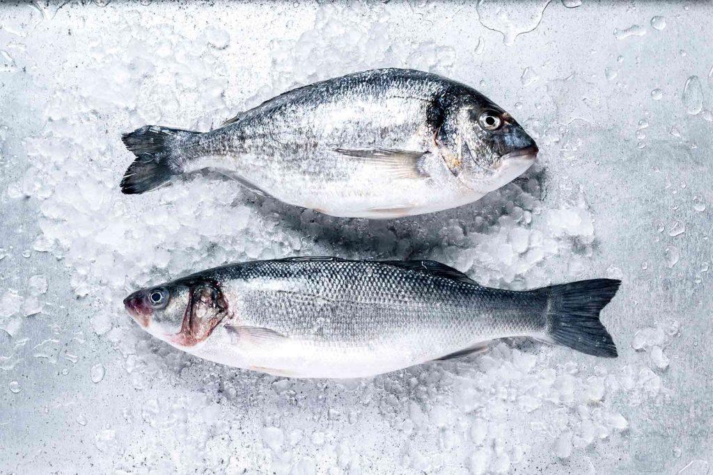 ryby po angielsku