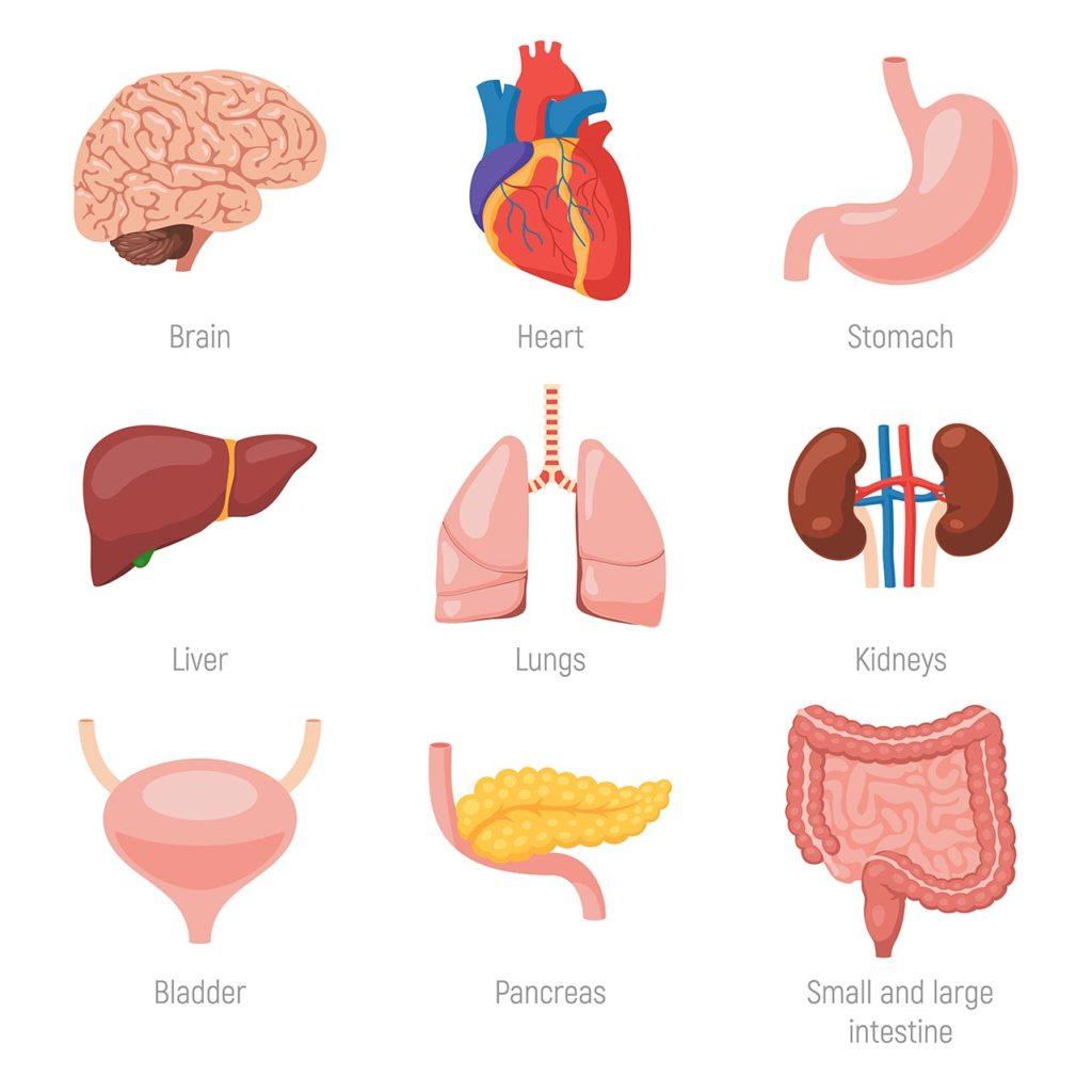 części ciała po angielsku