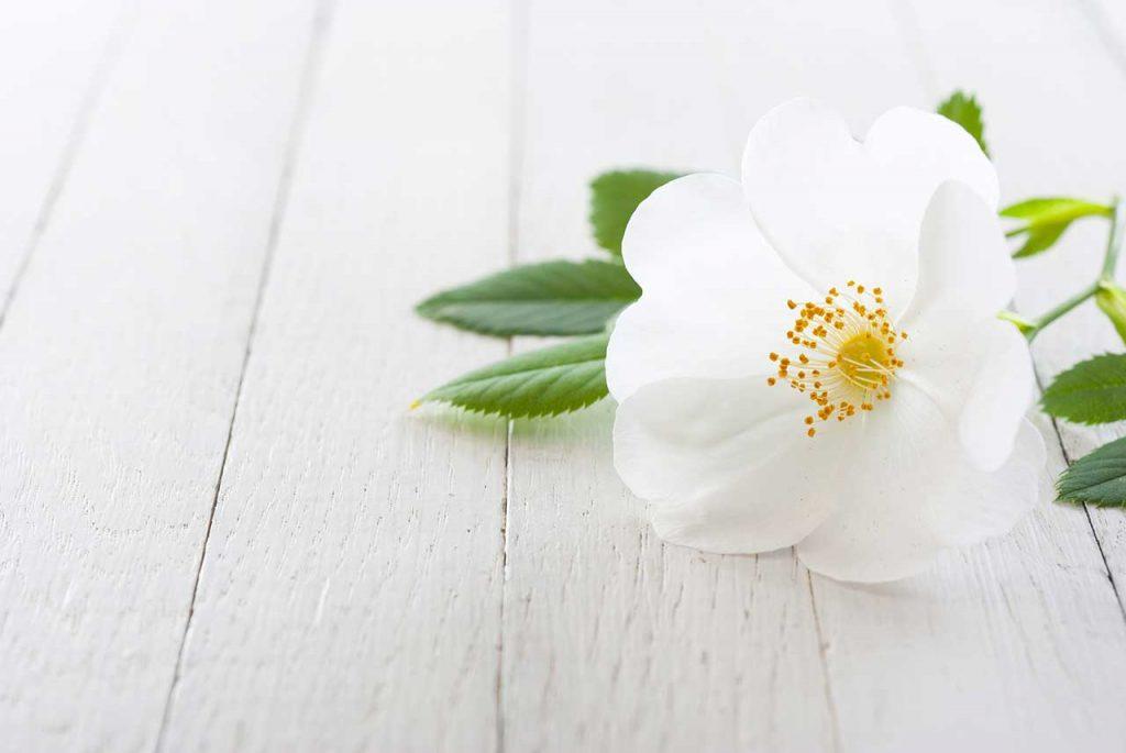Kwiaty Po Angielsku 100 Nazw Kwiatow Ella